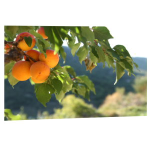Poster photo ou impression photo panoramique de qualité sur Artdeqo